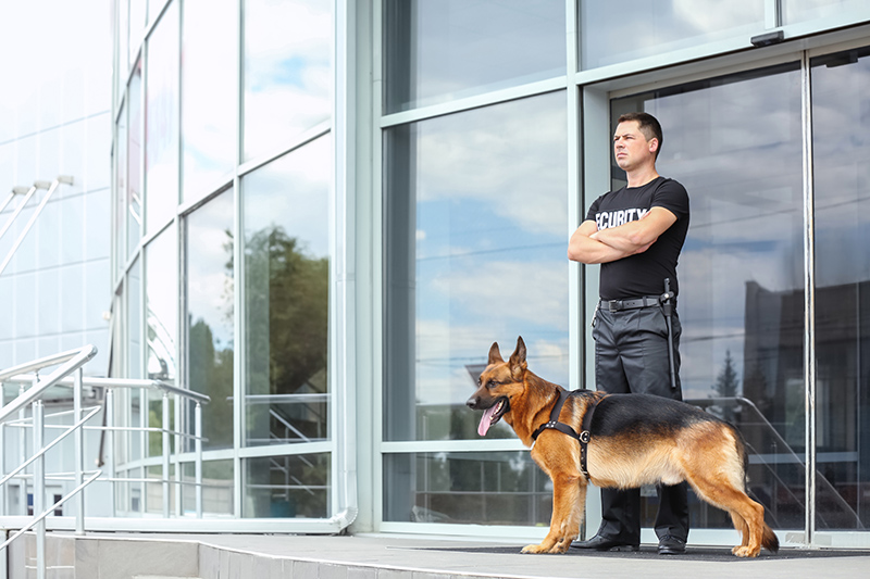 Security Guard Cv in Richmond Greater London